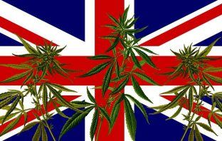 UK flag with cannabis