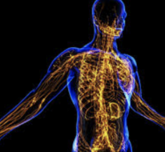 How Cannabis is Helping Your Lymphatic System and You Have no Idea