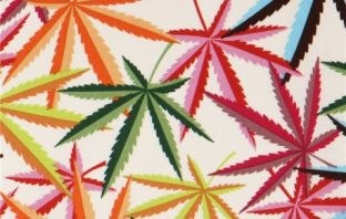 colourful cannabis