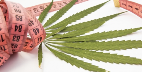 Phytocannabinoids: Useful Drugs for the Treatment of Obesity? Special Focus on Cannabidiol